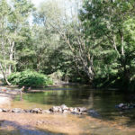 Auvergne Rhone-Alpes Allier camping trezelles riviertje bomen bosrijk
