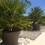 Dordogne Nouvelle Aquitaine grote planten in de tuin