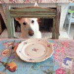 Ardennes Grand-Est hond chambres dhotes