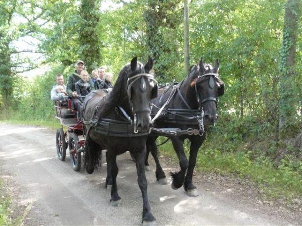 chambres d'hoteszoeken - ferme de letang - paarden
