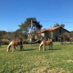 Charente Nouvelle Aquitaine chambres dhotes paarden weiland huis